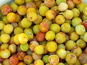 Ripe yellow plums, mirabelles