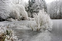 Frosted winter landscape featuring reeds, a meadow, fallen tree, and a frozen lake, Hesse, Germany, Europe