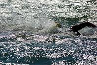 Swimming, Sport, Palmas, Tocantins, Brazil