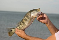 Fishes Sporting, Tucunaré, Palmas, Tocantins, Brazil