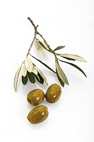 Olives and an olive branch (Olea europaea)