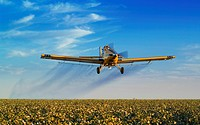 Agriculture _ A fixed wing aerial application aircraft applies a defoliant to a mature cotton crop in early Autumn / CA _ San Joaquin Valley
