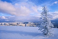 Snow covered hills and trees of the Black Forest behind a lone snow-covered tree in a field, Black Forest, Baden-Wuerttemberg, Germany