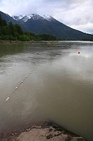 First Nations gillnet set in a back eddy of the Skeena river for early season chinook salmon and sockeye salmon. Near the confluence of the Skeena Riv...