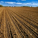 Agriculture _ A large conventionally tilled field freshly planted with grain corn, pre_gremination / Canada _ Ontario