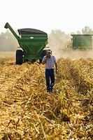 Agriculture _ A farmer walks through corn stubble during the harvest while talking on his cell phone. A John Deere combine and grain wagon are in the ...
