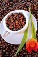 Cup and saucer filled with coffee beans placed on a bed of coffee beans and garnished with a red tulip