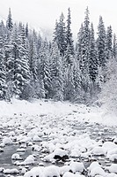 Winter at creek feeding Maligne River, Jasper National Park, Alberta, Canada