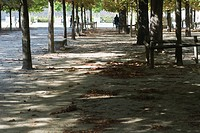 France, Paris, fallen leaves scattered in shady park