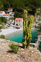 Sutmiholjska Cove and beach behind a cactus, Mljet Island, Dubrovnik-Neretva, Dalmatia, Croatia, Europe