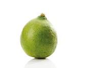 Limequat (Citrus x floridana)