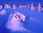 Winter on Cervena hora, Hrubý Jeseník mountain range, protected landscape area, Northern Moravia, Czech Republic, Central Europe