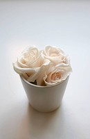 Close up of roses in small flower pot