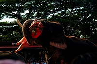 Elephants Show, Bangkok, Thailand
