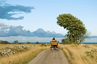 Man driving a horsecart on a country road