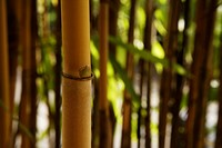 brown bamboo shoot in foreground