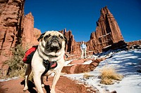 Pug dog wearing backpack stands on trail as owner looks on from distance at Fisher Towers outside Moab, Utah, USA