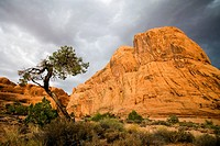 Stormy skies loom above a sandstone pinnacle and a weathered pinyon pine outside Moab, Utah