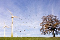 Falling leaves, tree, Wind Turbines