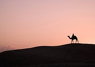 Silhouette of a person riding a camel, Jaisalmer, Rajasthan, India