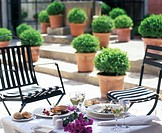 Terrace with boxwood