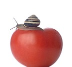 Tomato with snail