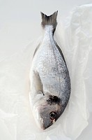 Gilt_head bream