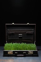 Grass in briefcase