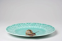 Snail on a plate