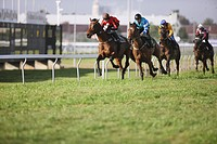 Group of horse racing in a horse race