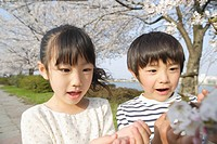 Japanese kids looking at cherry flower