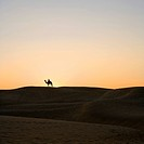Silhouette of a person riding on a camel in a desert, Thar Desert, Jaisalmer, Rajasthan, India
