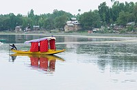 Man rowing a shikara, Manasbal Lake, Srinagar, Jammu And Kashmir, India