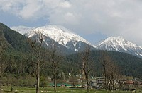 Trees in front of a snowcapped mountain, Pahalgam, Anantnag District, Jammu And Kashmir, India