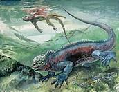 Zoology: Reptiles - Marine Iguana (Amblyrhynchus cristatus). Art work