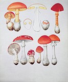 Close_up of different types of mushrooms