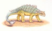 Palaeozoology - Cretaceous period - Dinosaurs - Euoplocephalus - Art work