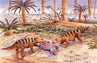 Palaeozoology - Triassic period - Extinct reptiles - Therapsids - Cynognathus tear to pieces a  Lystrosaurus - Art work