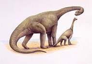 Illustration of Ultrasaurus with calf