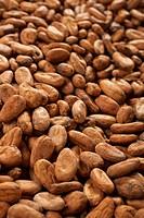 Cocoa beans full_frame