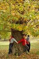 Seniors, activity, boisterously, outside, tree, autumn,