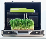Grass growing in briefcase