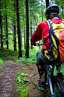 mountainbike, man, forest, back view, mountainbiker, sport, athletes, extreme_sport, trend_sport, path, downhill, nature, adventures, wheel_tour, prof...