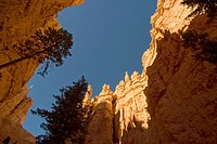 USA, Utah, Bryce Canyon.View of hoodoos and cliffs looking up from canyon floor in Bryce amphitheater