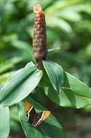 St Martin, the butterfly farm