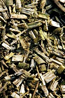 Biomass project. Image 4 of 4. Close_up of wood chippings made from tree saplings grown at a biomass demonstration project in Bruges, Belgium. These w...