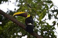Costa Rica, Central America, Casa Herve, island, C