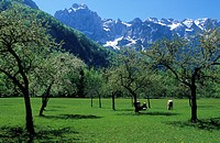 Slovenia, valley, mountains, meadow, blossoming fr