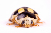 freigestellt, alfred, animal, animals, beetle, close_up