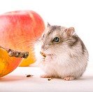 Cankerous, animal, apples, apple, animals, alfred (thumbnail)